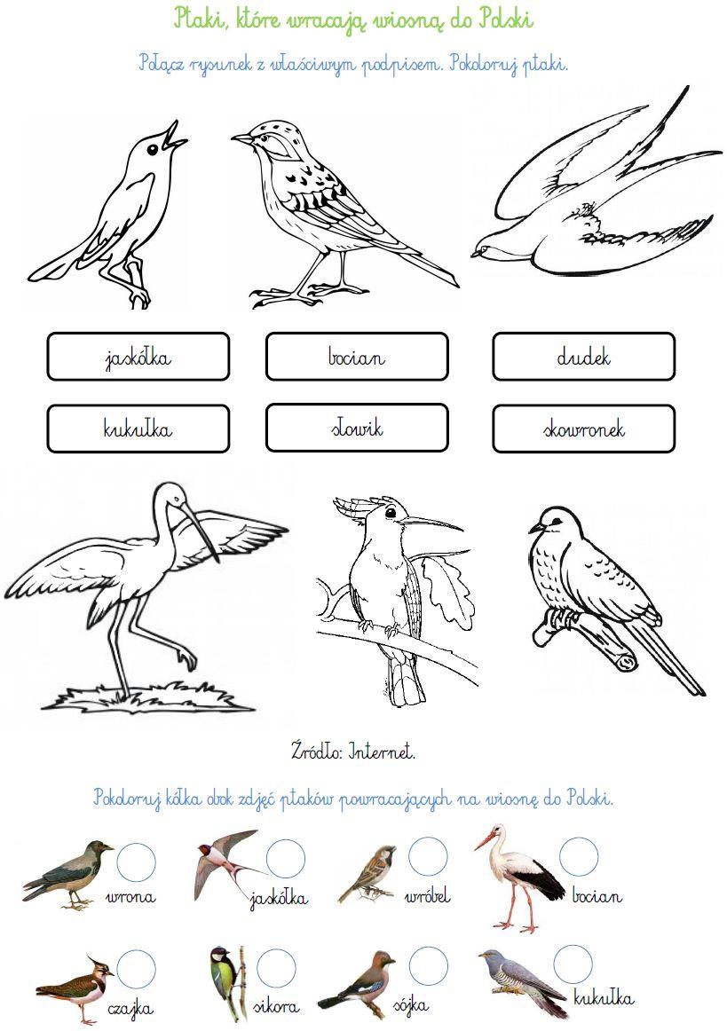 Ptaki Wędrowne: http://www.ekokalendarz.pl/wp-content