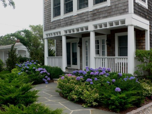 blue hydrangeas in front yard landscape