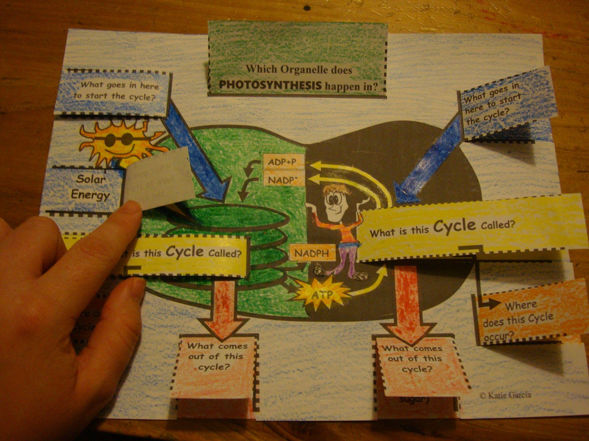 Food Chain Worksheet High School