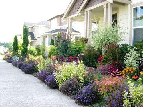 Nandina Lobelia Euonymous Barberry Plants Front Yard Curb
