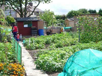 Garden Allotment Design English Allotments A Very British