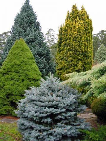 Plantas Milenarias! Gardens Beautiful And Backyards