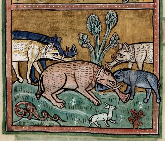 Image result for Medieval Manuscript animals breeding