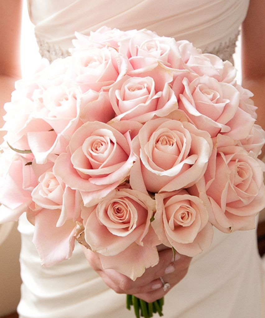 Light pink roses  Blush Weddings  Pinterest  Pink roses
