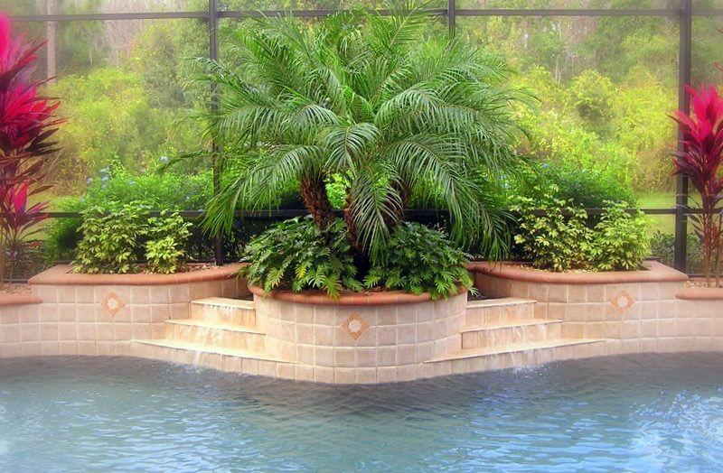 Greenery In Raised Planters Behind Pool Outdoors Pinterest