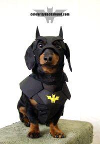 Crusoe as BATDOG - batman Halloween costume   Halloween ...