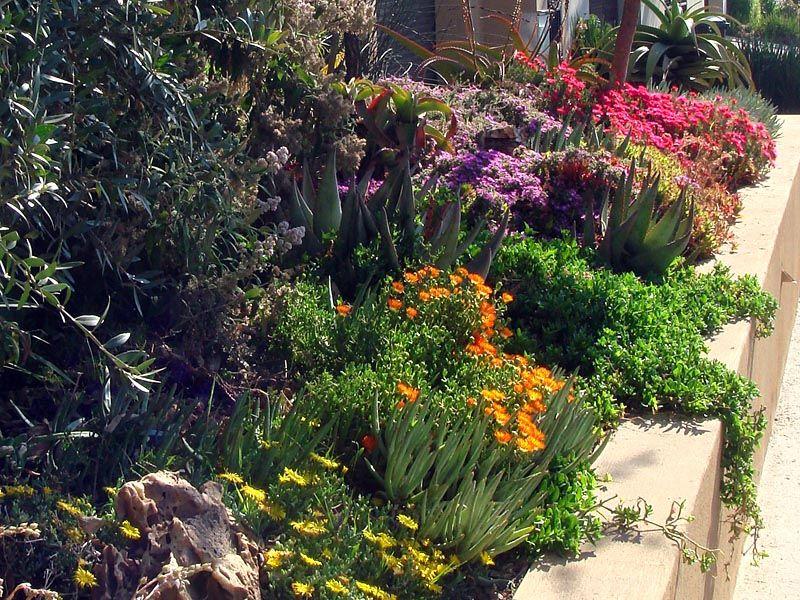 Indigenous Garden Things I Love Pinterest Gardens LUSH And