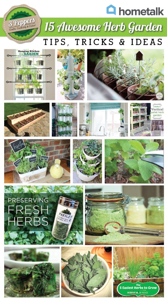 15 Awesome Herb Garden Tips Tricks And Ideas Idea Box By Kristy