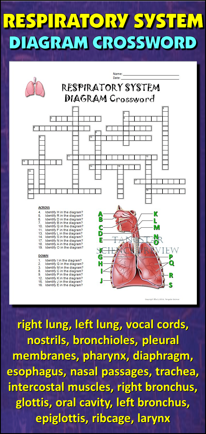 Wiring Diagram As Well Ether Get Free Image About Wiring Diagram