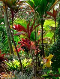Wall Murals Landscape, Canvas Prints & Posters - Tropical ...