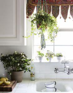 Paige morse design also decor ideas pinterest kitchens plants and rh