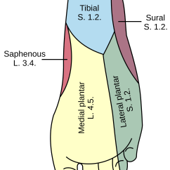 Foot Massage Therapy Diagram C Tec Conventional Fire Alarm Wiring Nerves In The Feet Google Search Injury Help