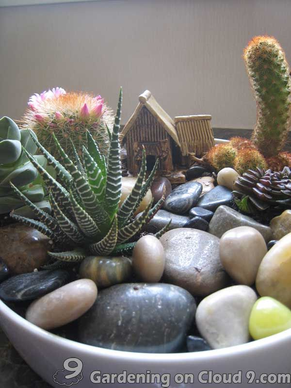 Indoor Gardening Indoor Garden Gallery Of Tabletop Container
