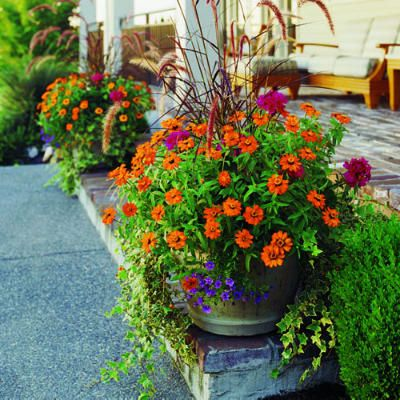 58 Cool Container Gardens Gardens Container Gardening And Front