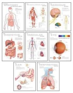 Human anatomy chart pack wallchart and online book store also rh pinterest