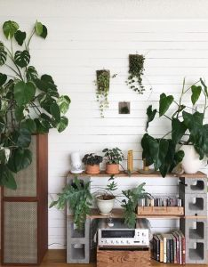 Botanical decor house plants also pin by zenopia on inspiration pinterest cinder block shelves rh