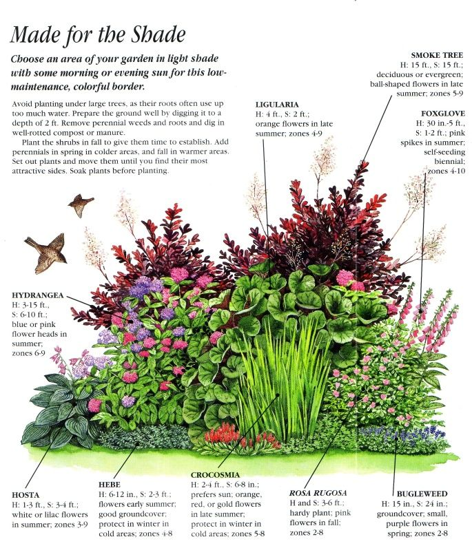 Ideas For An Easy Care Shady Border Pinteres