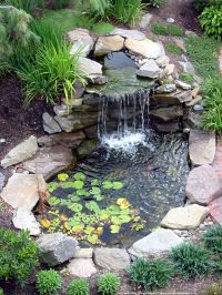 Cute Water Lilies And Koi Fish In Modern Garden Pond Idea ...