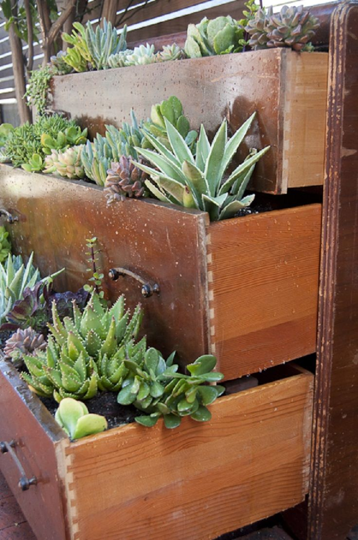 TOP 10 DIY Outdoor Succulent Garden Ideas Gardens Planters And