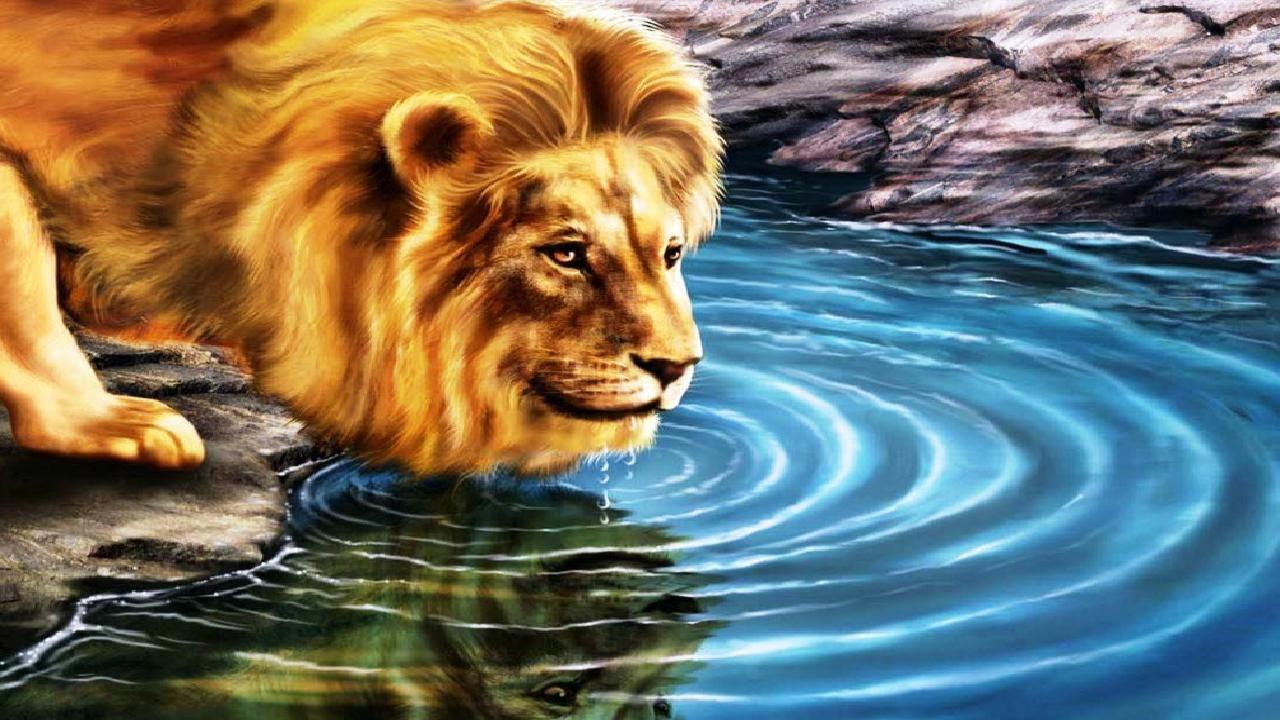 thirsty lion 3d hd wallpaper | 3d hd wallpapers | pinterest | hd