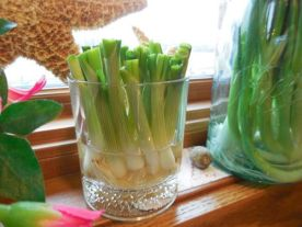 Image result for regrowing spring onions