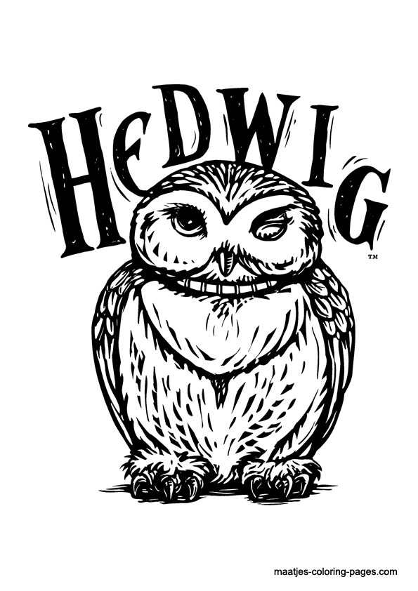 hedwig  ️harry potty ️  pinterest  harry potter