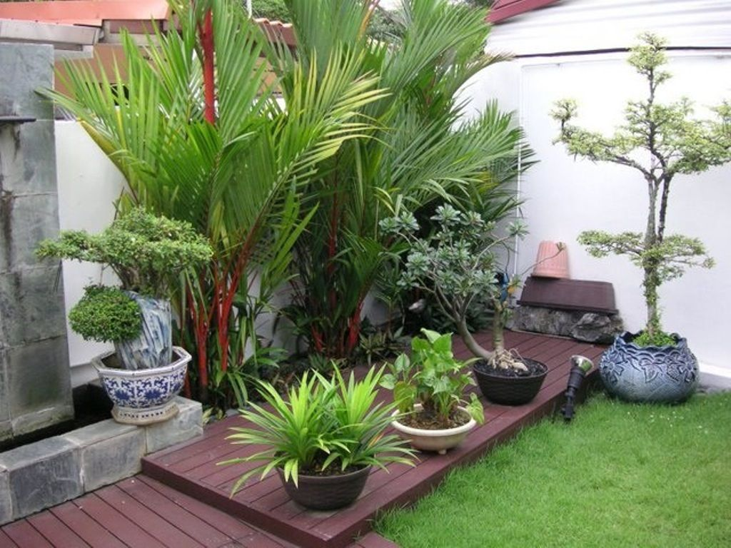 Outdoor Tropical Plants For Small Garden Design With Dark Wooden