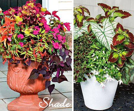 Potted Plants For Shade Flowers Pinterest Spillers Designs