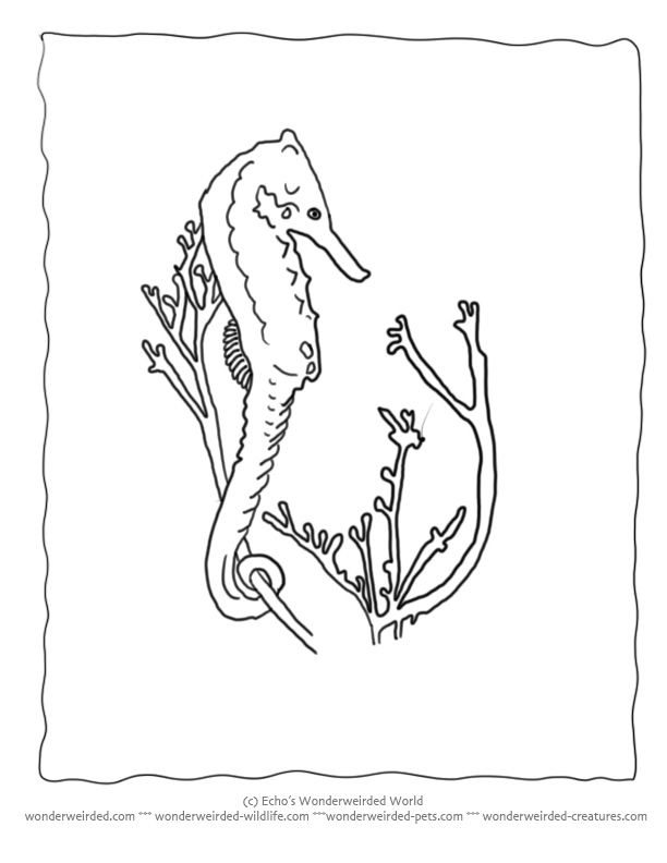 Seahorse Coloring Pages Ocean Collection at www