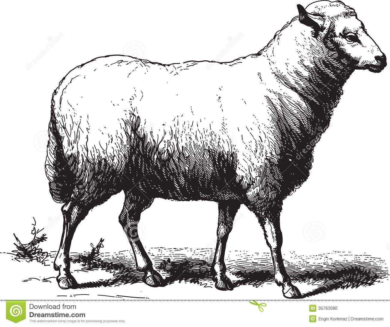 Sheep Stock Illustrations Vectors Amp Clipart 15 547