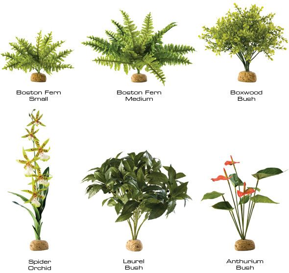 Names Floating Water Plants