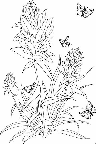 Butterflies and flowers Adult Coloring Pages Pinterest