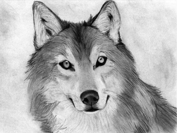 Beginners Charcoal Drawings Animals