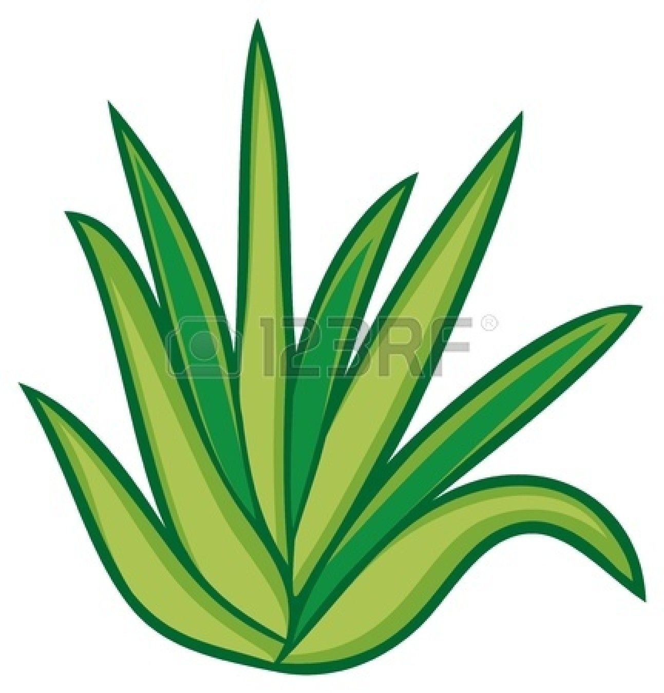 plant diagram clip art wiring for house db south africa aloe vera stock vector illustration cactus