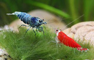 Skaii And Shrimps Blogspot Fr 2011 05 01 Archive Html