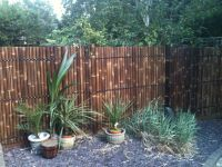 Best Bamboo Fencing For Garden and Outdoor Design: Reed ...