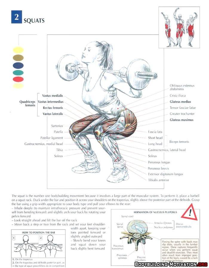Training Anatomy - Legs - Squats | Gym - Legs | Pinterest ...