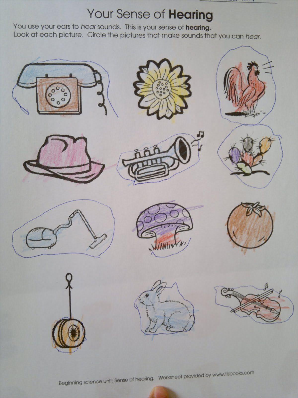 Sense Of Hearing Activities