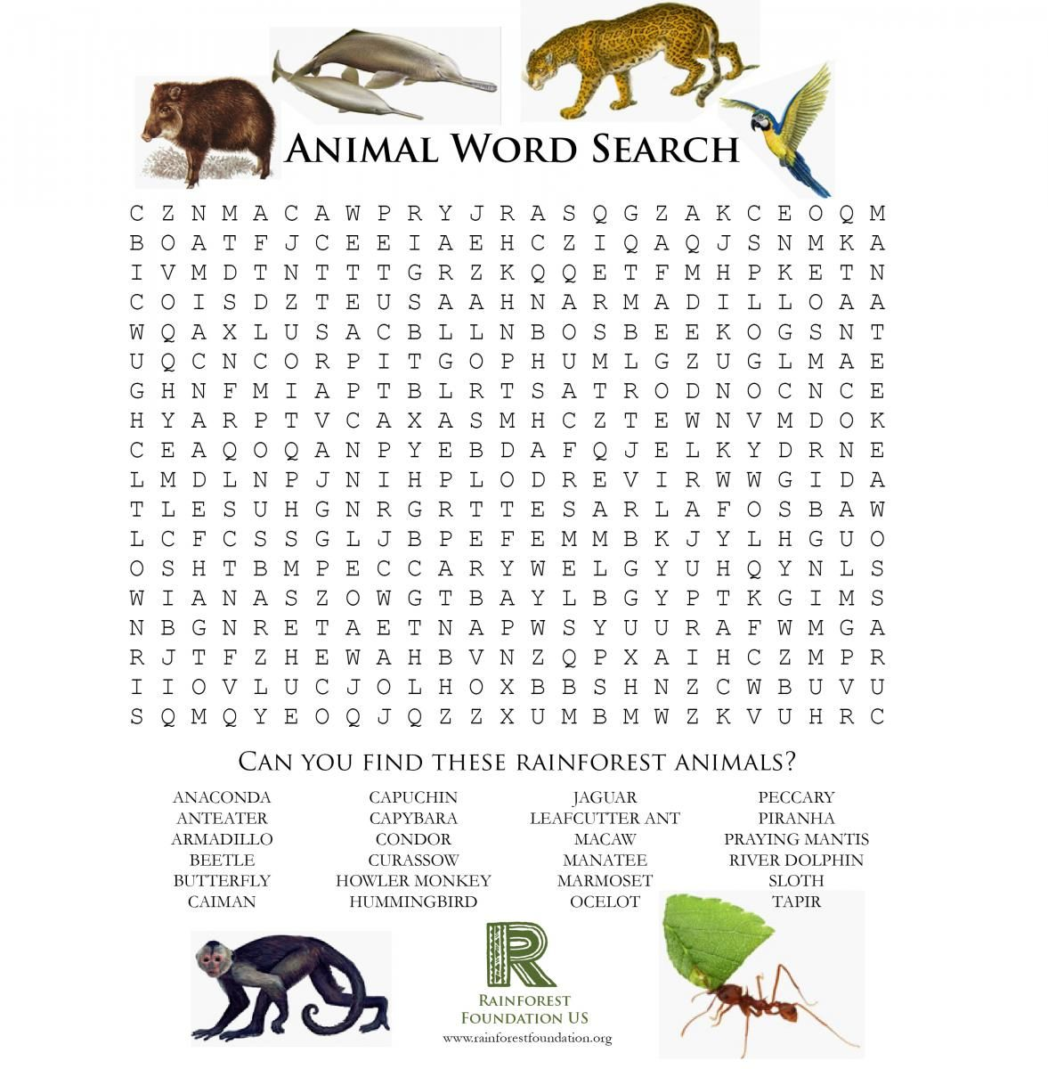 Rainforest Games And Worksheet Activities
