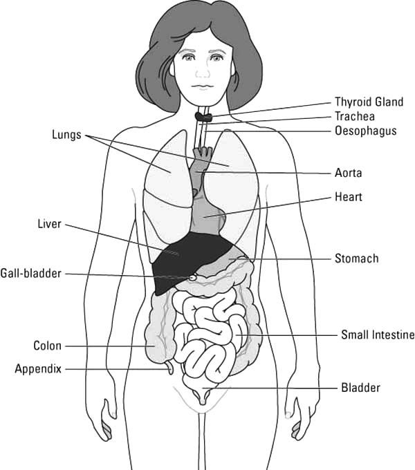 Human Body, : Whole Human Body Diagram Coloring Pages