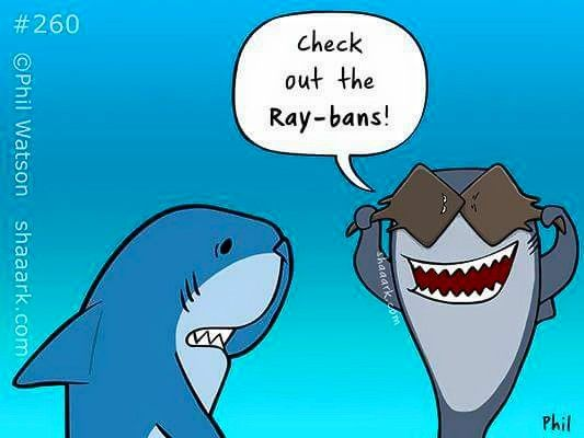 Best 25 Shark Puns Ideas On Pinterest Cute Shark