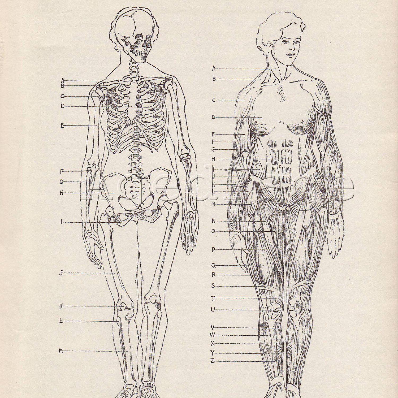 Vintage Anatomy Print, Human Anatomy Chart, Book