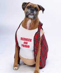 15 Hilarious Dogs in Costumes