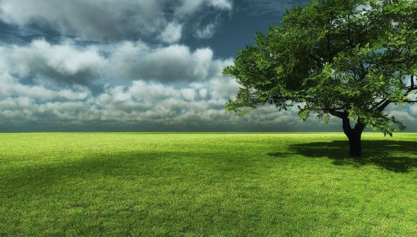 big tree with grass field landscape