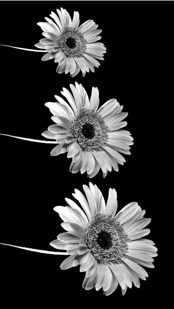 Black And White Tumblr Iphone 5s Wallpaper Imgurl