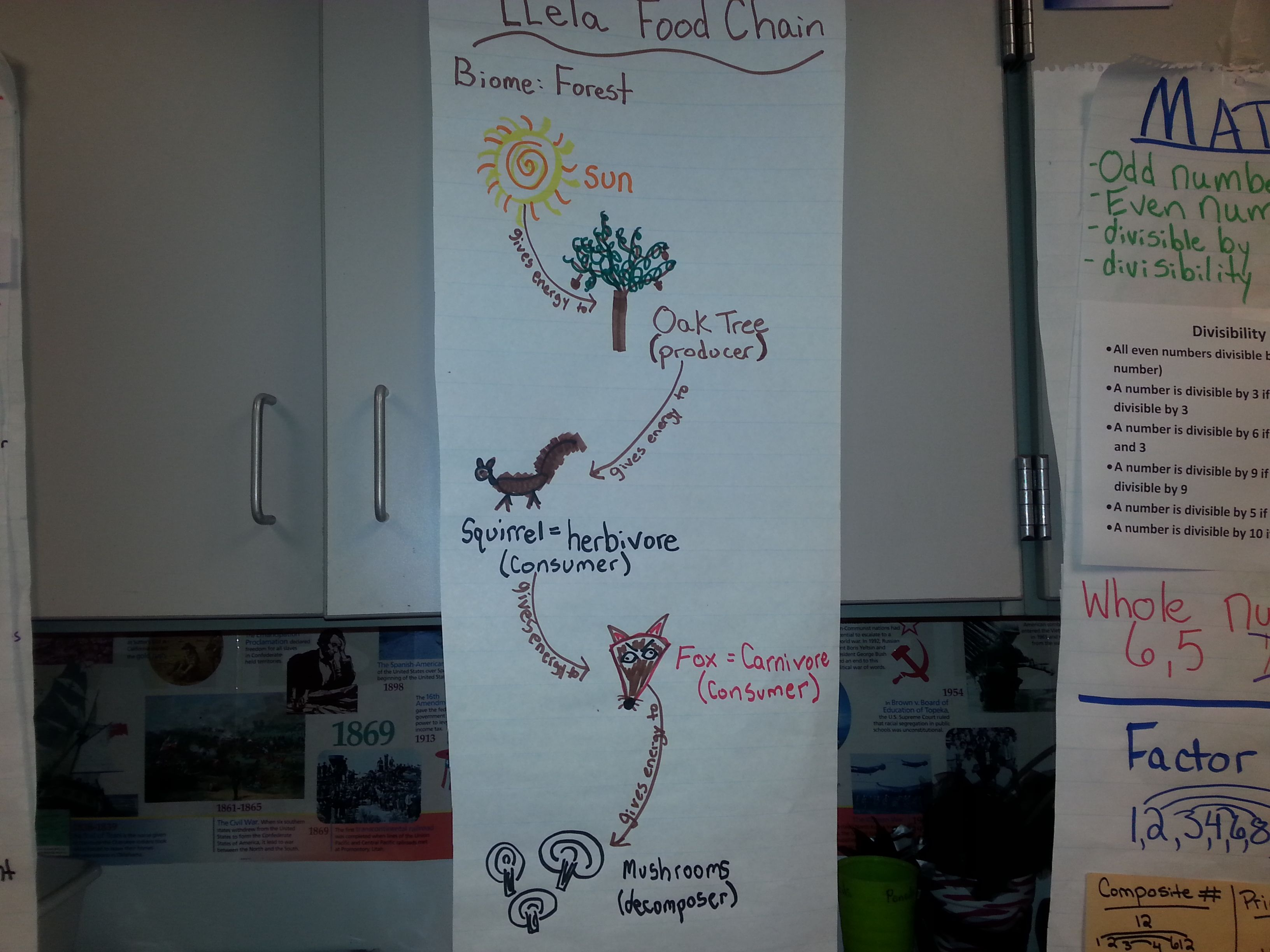 Food Chain Anchor Chart From The Pensive Sloth Looking At