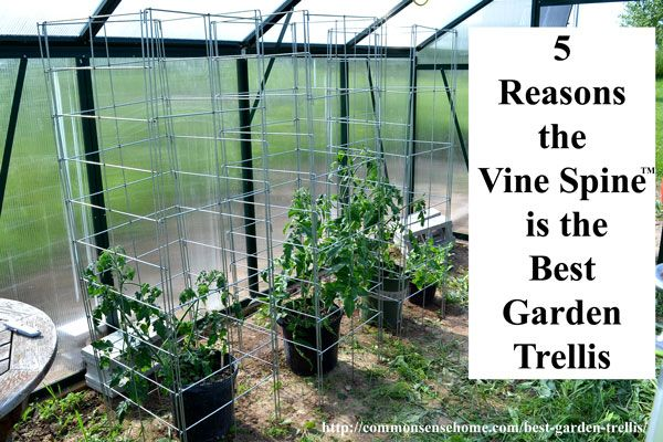 5 Reasons The Vine Spine Is The Best Garden Trellis Gardens