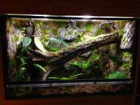 Blood Python enclosure | Ides pour la maison | Pinterest ...