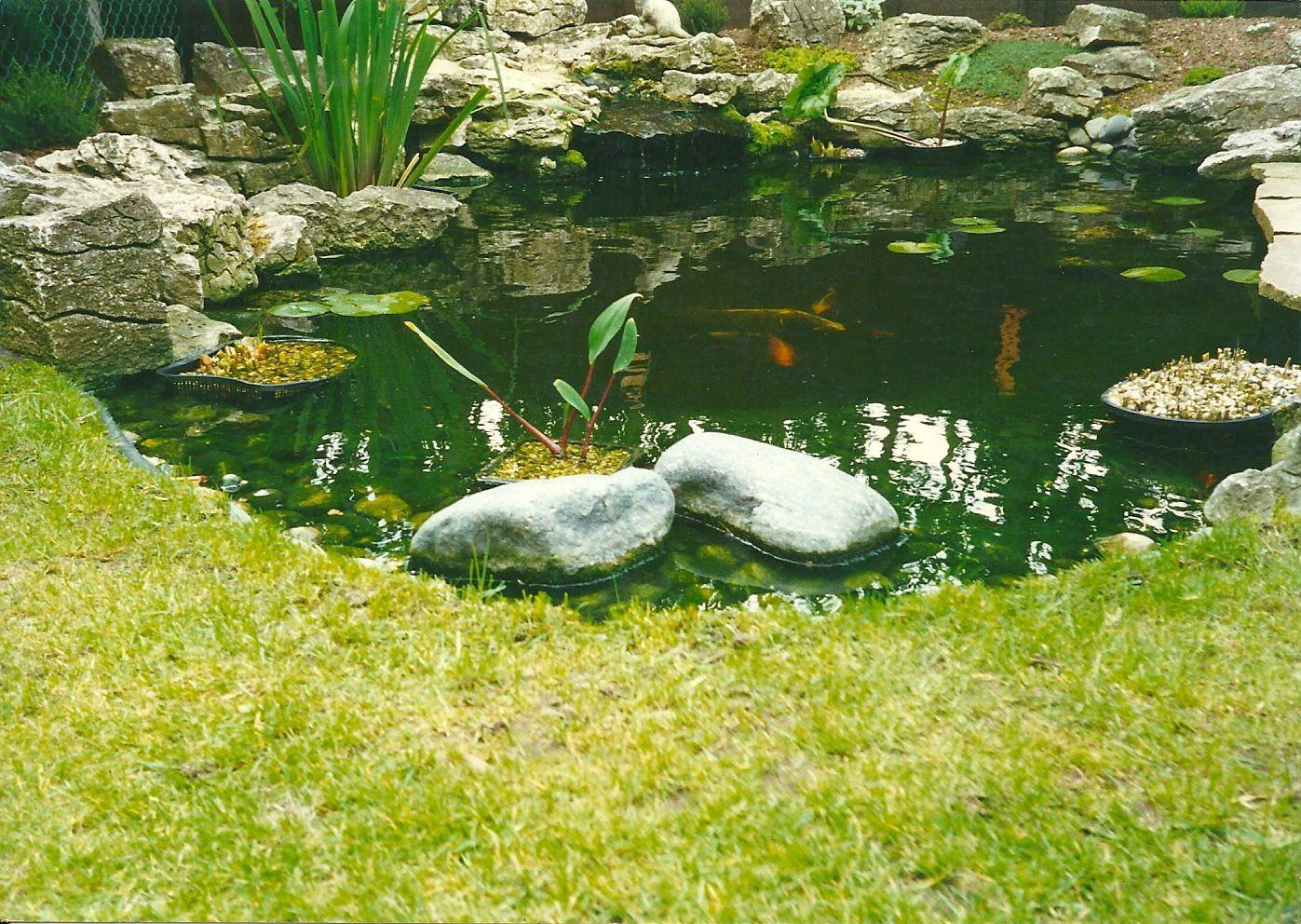 Grass And Boulder Edging My Backyard Pond Inspirations