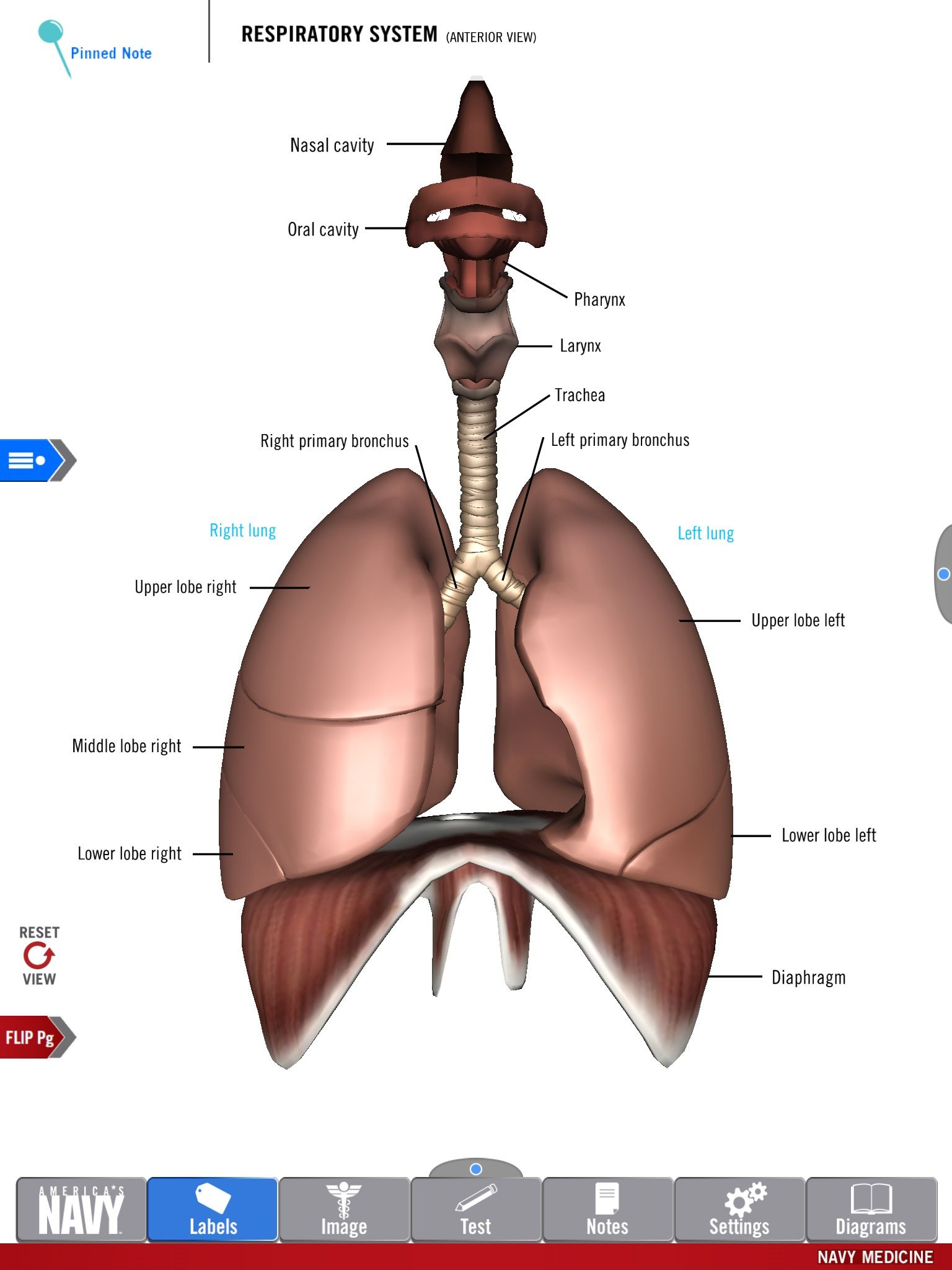 diagram of 3 1 rescue system discovery 2 radio wiring the respiratory from free anatomy